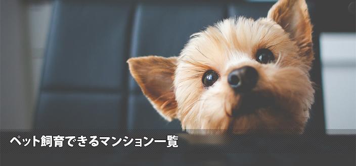 image_74